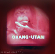 Is that how orangutans spell 'orang-utan'?